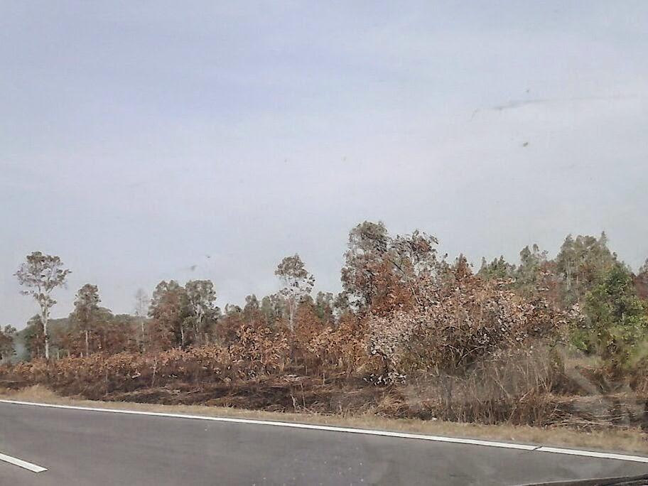 kesan kebakaran hutan
