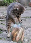 ყველამ ვიცით, როგორ უნდა ამ კატას თევზი