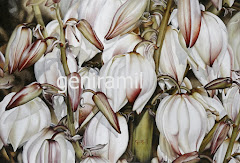 Flor de yuca