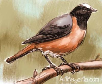 Common Redstart sketch painting. Bird art drawing by illustrator Artmagenta