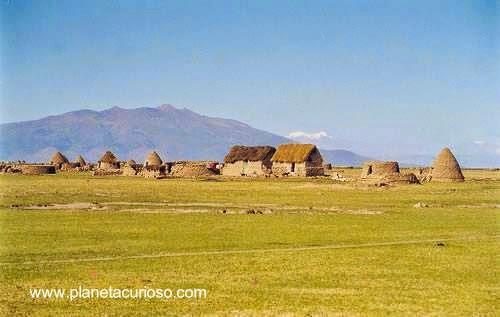 Putucus en el Altiplano de Bolivia