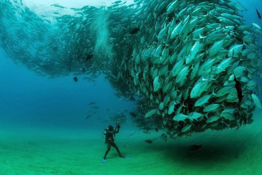интересные рыбы мира фото