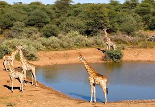 http://www.namibiareservations.com/mountetjoe.html