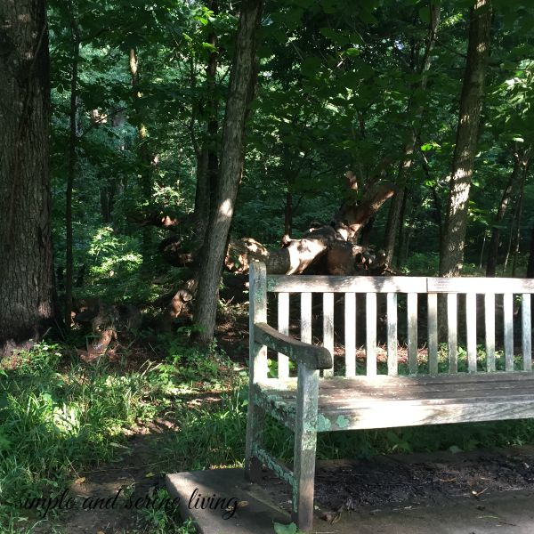 rustic bench woods
