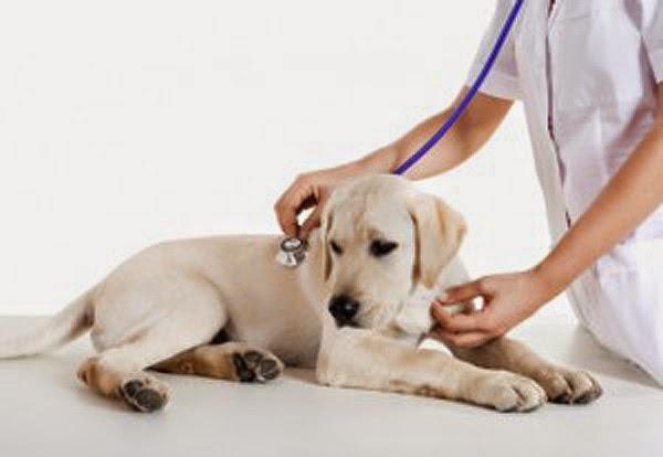 seguros animales