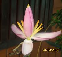 ดอกไม้...ให้คุณ [http://dokmai4u.blogspot.com/]