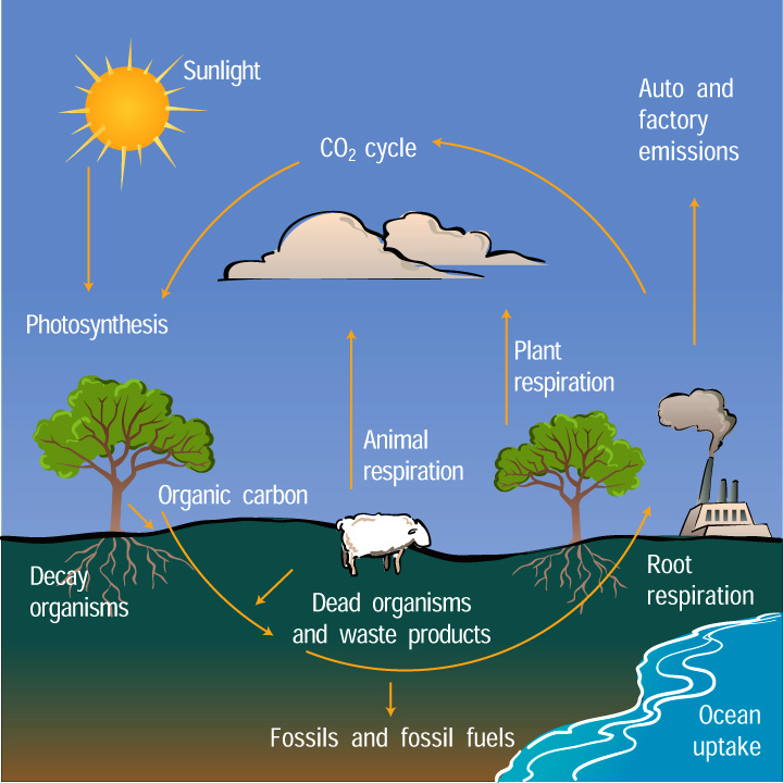 ... College Chemistry- Mr Adrian Ramlal's Class!: The Carbon Cycle Diagram