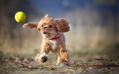 smiješne slike pas loptica