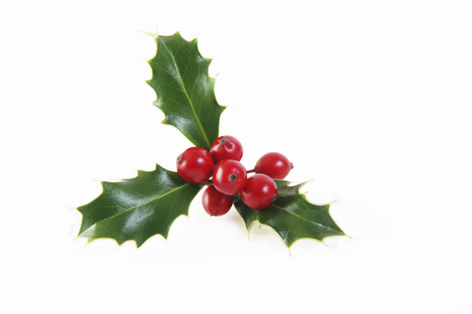 Real Trees For Christmas