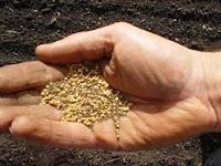 Health Benefits Of Mustard Seed