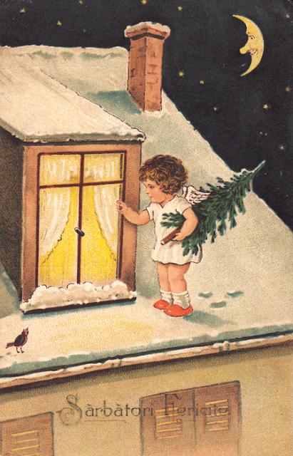 Bradul la geam