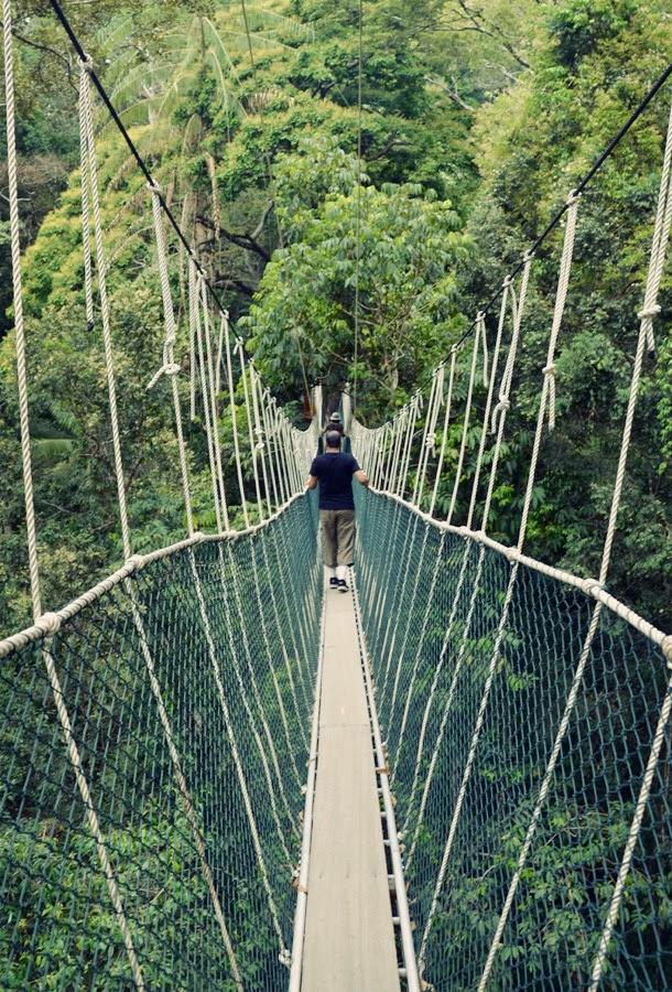 Canopy Walk, Taman Negara, Malaysia