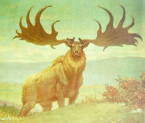 Most Amazing Extinct Land Animals Irish Deer