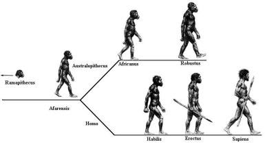 evolution of the genus homo the modern synthesis The timeline of human evolution outlines the major events in the development of the human species, homo sapiens, and the evolution of the human's ancestors it includes brief explanations of some of the species , genera , and the higher ranks of taxa that are seen today as possible ancestors of modern humans.