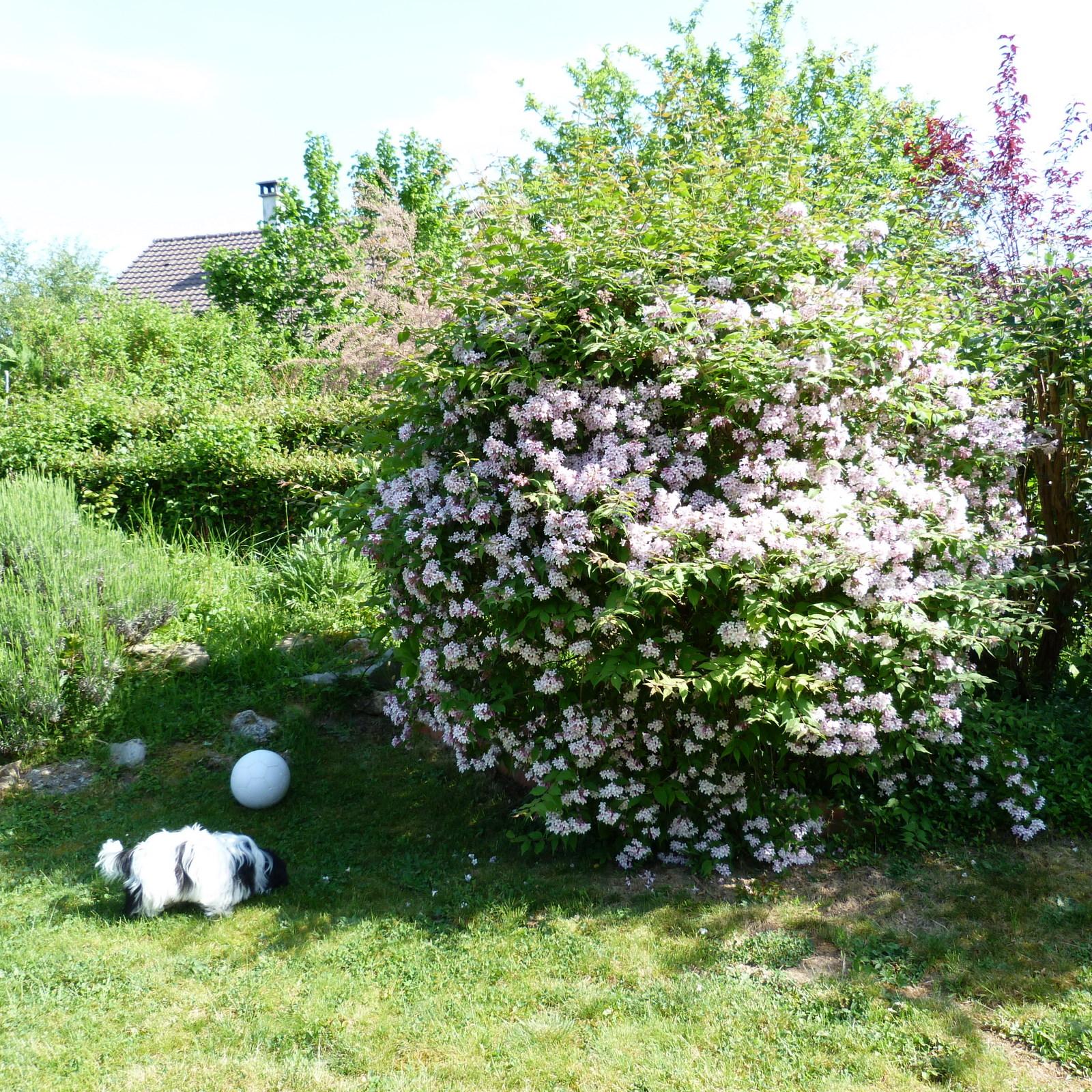 Petit patch smaranda nouvelles fleurs jardin fleuri - Idee petit jardin fleuri brest ...
