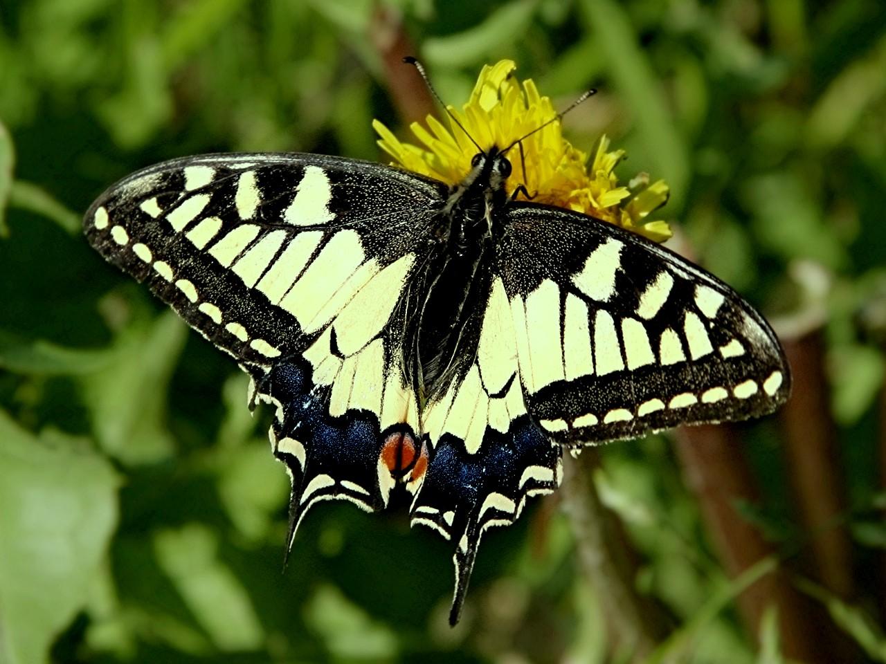 Classe de cm1 cm2 le monde des insectes - Reconnaitre les insectes xylophages ...