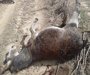 Homem que matou jegue a pauladas é condenado em Sergipe - Se