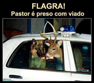 Cão pastor e veado galheiro presos em automóvel da polícia.