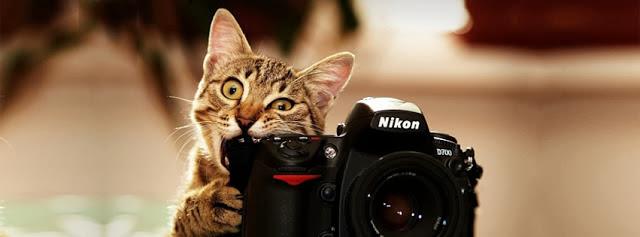 Gato Fotografo