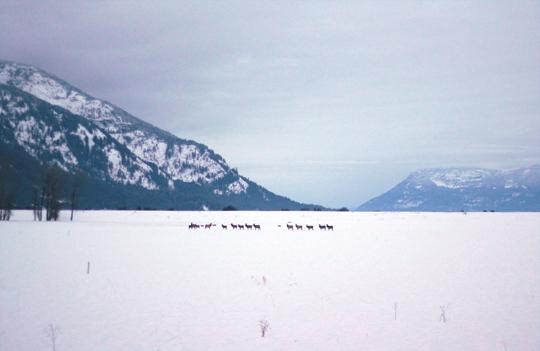 kootenai refuge deer elk