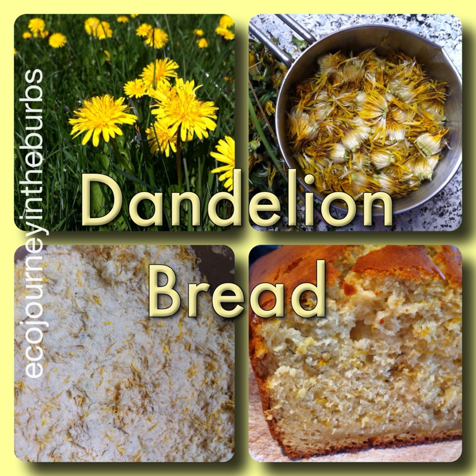 Eco Journey In The Burbs Diy Celery: Eco Journey In The Burbs: Dandelion Bread