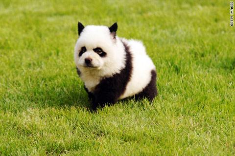 Panda dog 2