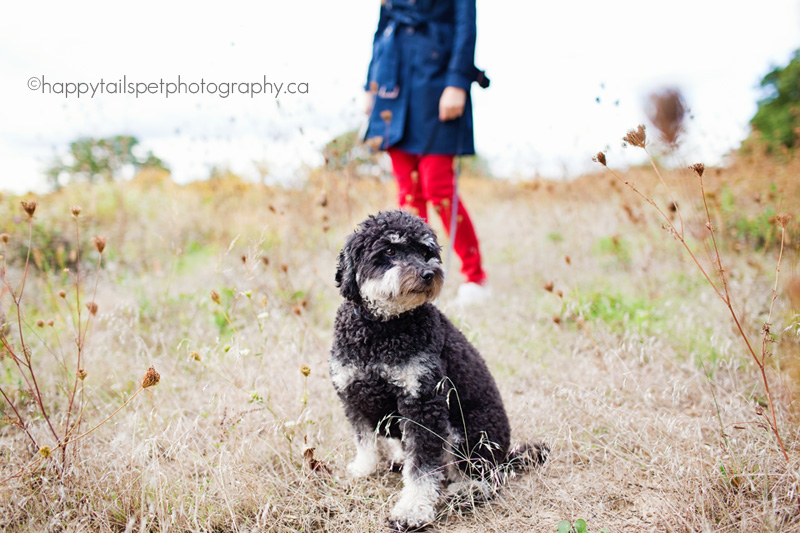 Small dog with woman wearing red pants in Burlington Ontario park.