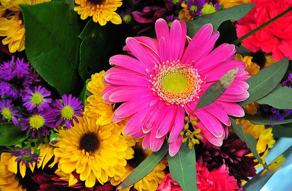Best flowers in the world best flower delivery