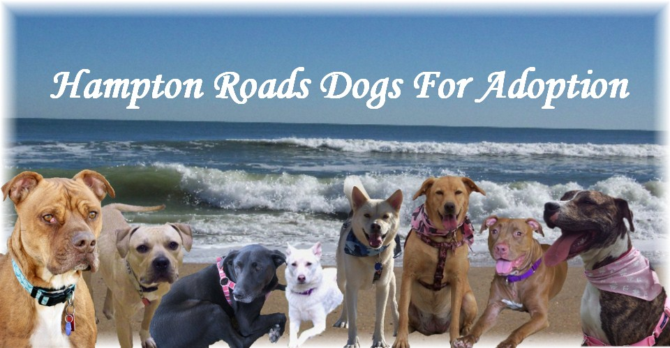 Hampton Roads Dogs For Adoption