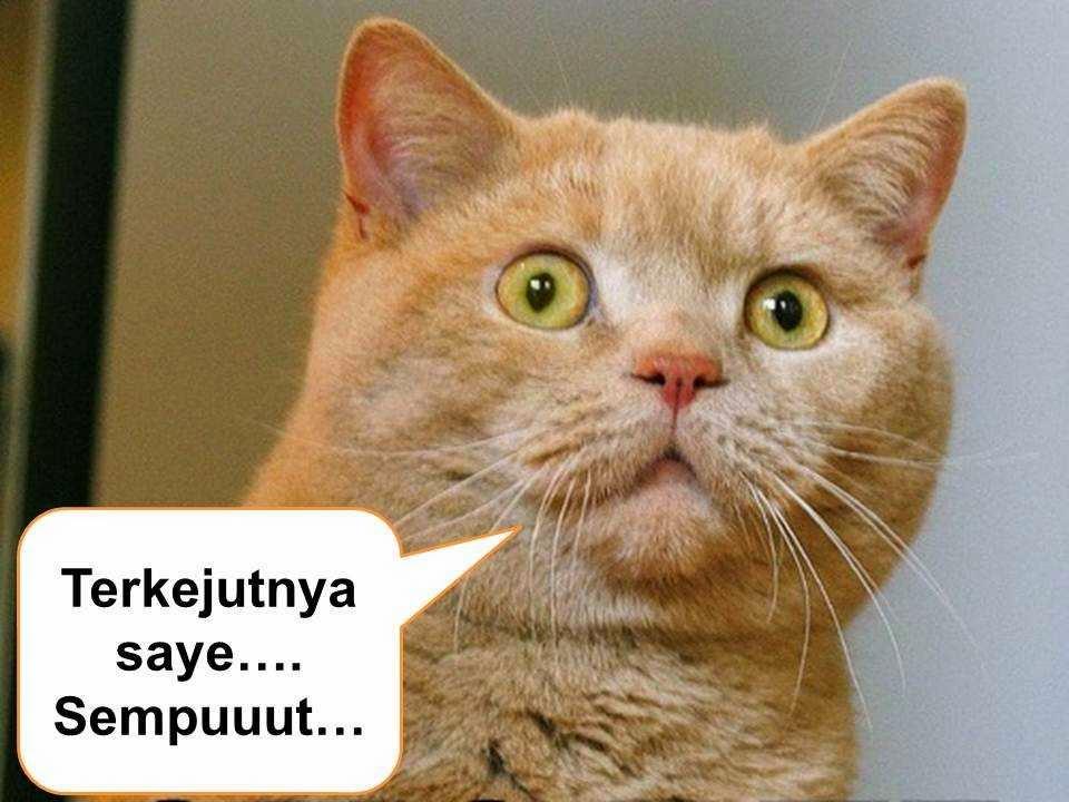 gambar ekspresi kucing lucu