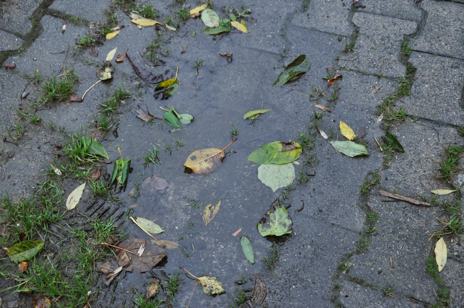 Herbstlaub in der Regenpfütze