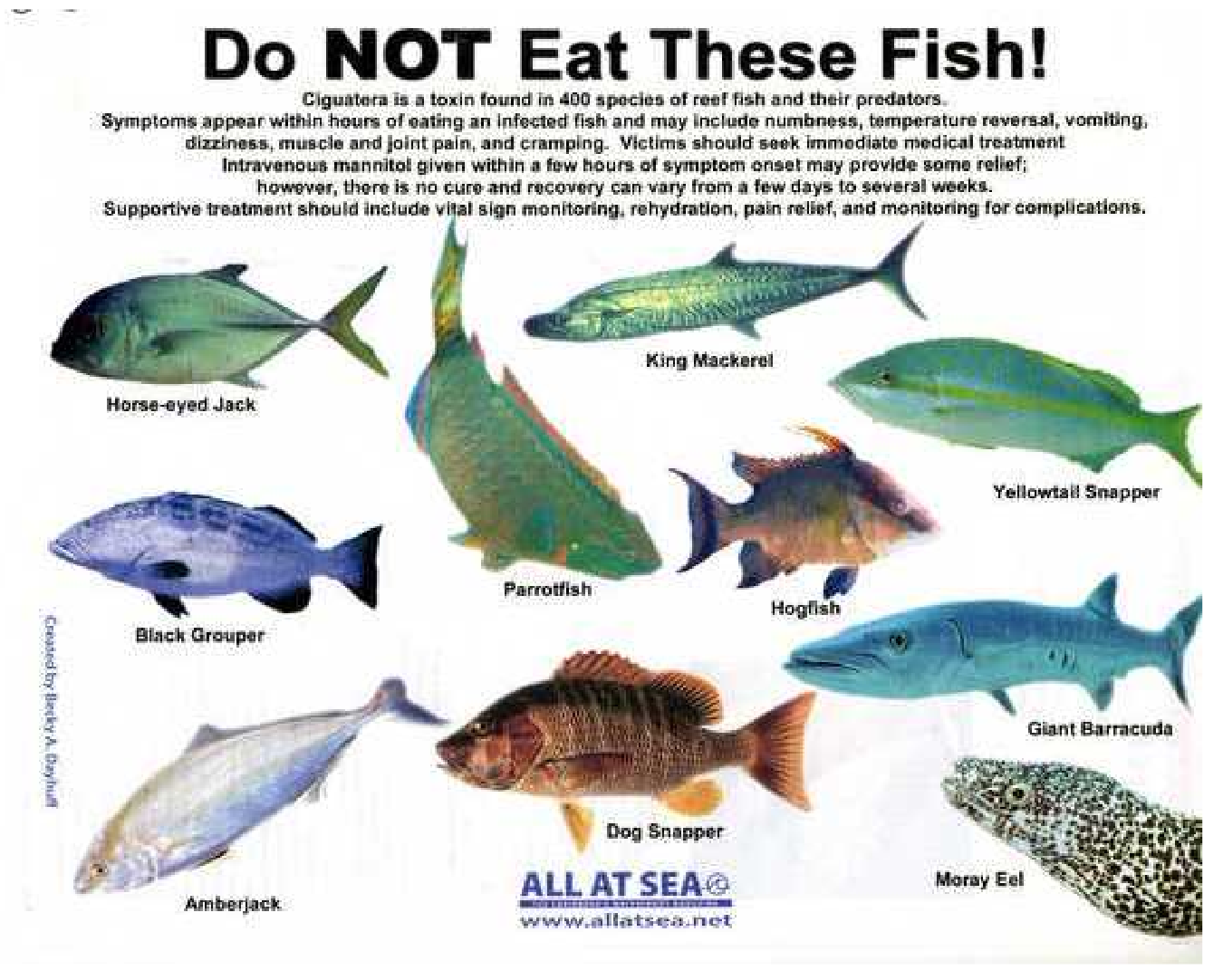 Image gallery names of poisonous fish for What is the best fish to eat