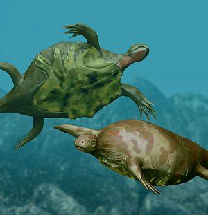 fossil Odontochelys