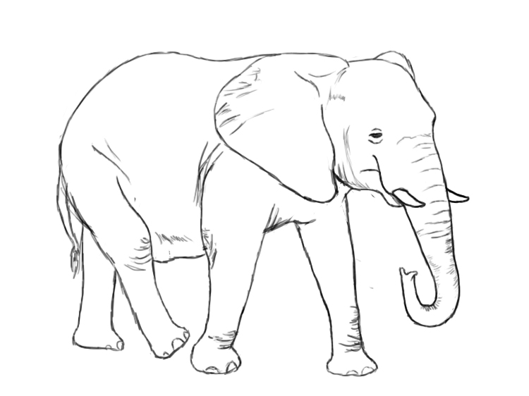 ... your elephant's skin by drawing in a few wrinkles near its joints: www.drawcentral.com/2012/05/how-to-draw-elephant.html