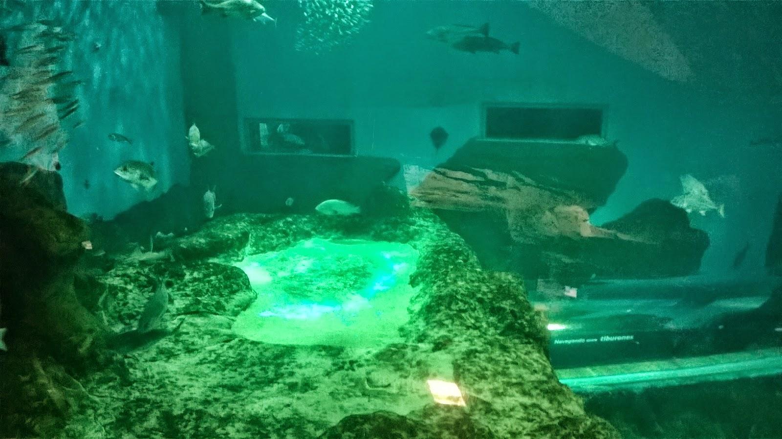 Acuario de sevilla - Entradas acuario sevilla ...