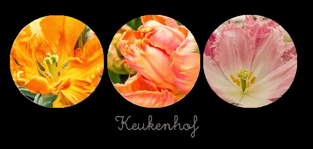 http://www.theflyingdutchwoman.com/2014/04/lost-in-flower-land-keukenhof.html