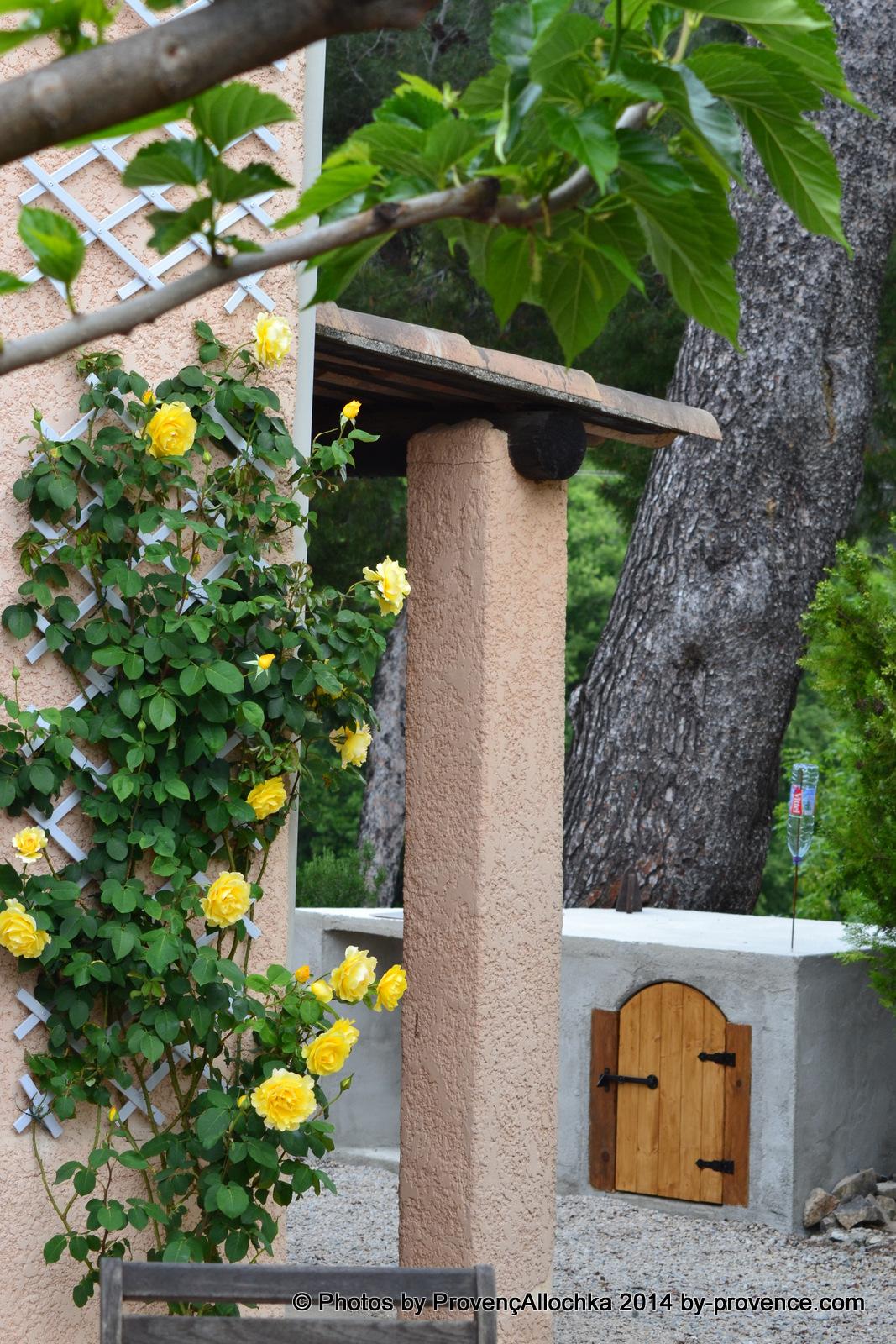 patio,rose,jatdn