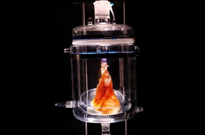 Un corazón humano con impresora 3D? | SFM NEWS