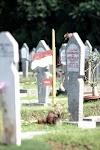 Merah Putih di Taman Makam Pahlawan Bintaro