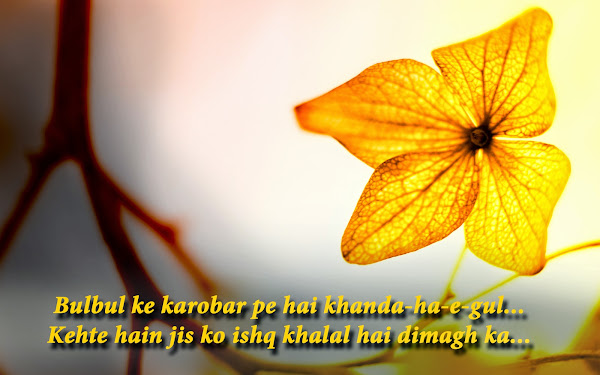 Love shayari on sadness in love Love shayari wallpaper Downloads