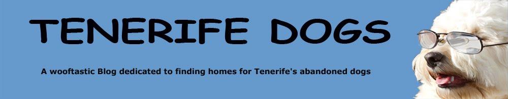 Tenerife Dogs