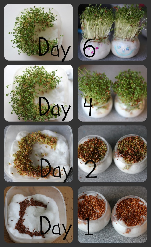 Growing Cress Heads And Initials