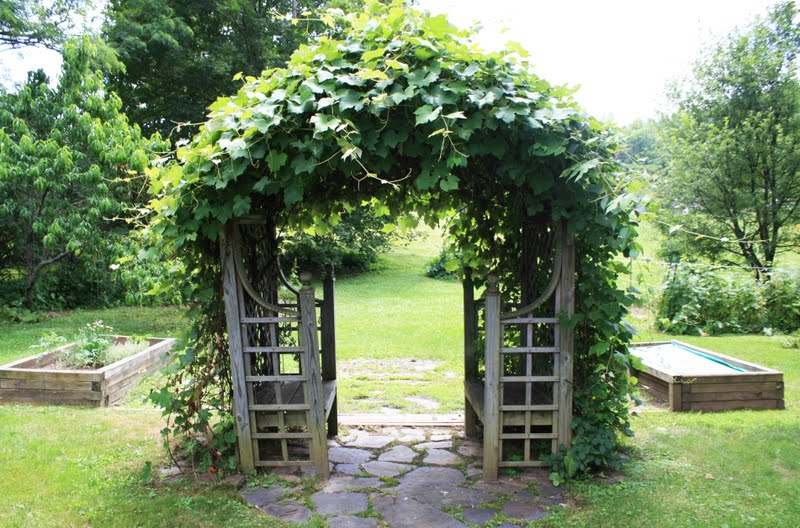 Backyard Vineyard Design : How sweet is the grapevinecovered trellis with builtin benches? And