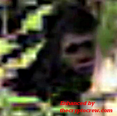 Enhanced version of Bigfoot photo