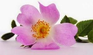 http://www.delapielcosmetics.com/product/index?searchbox=rosa+mosqueta