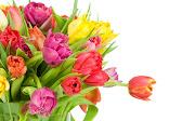 37 imágenes de Amor para escribir tus propios mensajes www