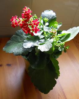 kolonchea de flores rojas