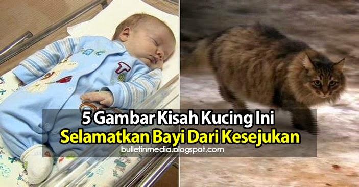 5 Gambar Kisah Kucing Ini Selamatkan Bayi Dari Kesejukan