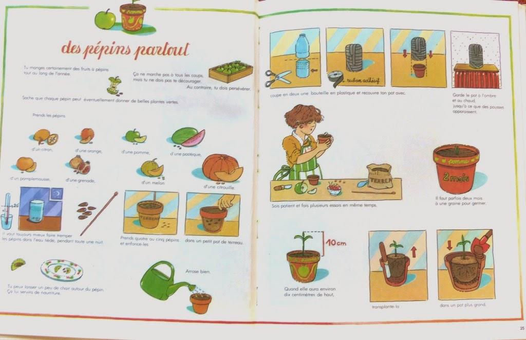 Un r ve de potager 4 faire pousser des p pins le match raisin citron - Comment faire pousser des lentilles ...