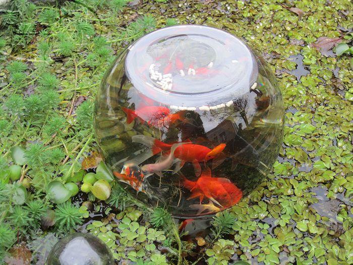 Manualidades puri diaz mirador de peces for Fabricacion de estanques para peces